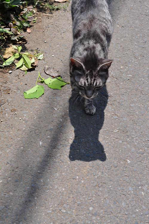 2010_06_02_a_cat